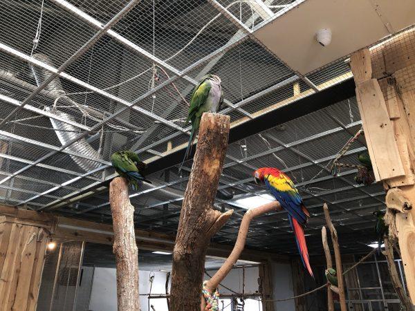 Papugarnia Kakadu w Poznaniu. Miejsce, w którym można dotknąć i nakarmić tropikalne ptaki